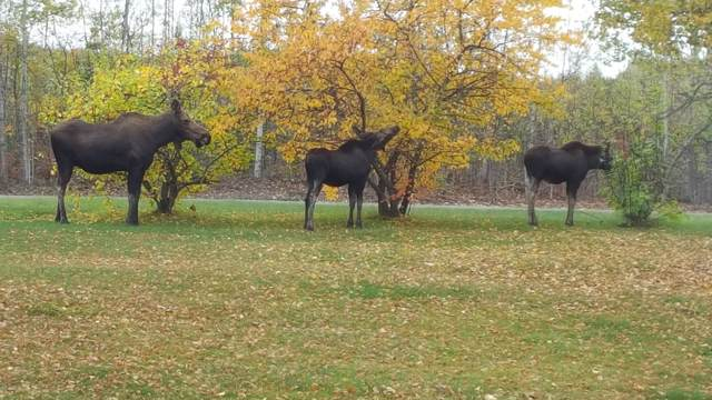 3161 S Buoyant Drive, Big Lake, AK 99652 (MLS #19-16216) :: Team Dimmick