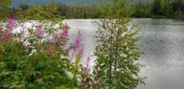 18081 W Bryant Road, Big Lake, AK 99652 (MLS #21-11070) :: Berkshire Hathaway Home Services Alaska Realty Palmer Office