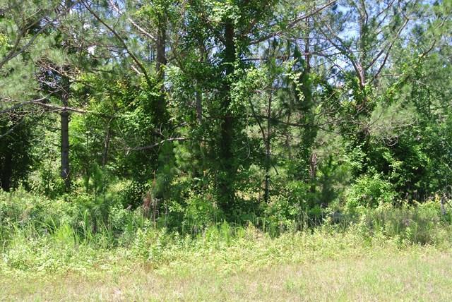 Lot: 133 Canvasback Drive, Leesburg, GA 31763 (MLS #138607) :: RE/MAX