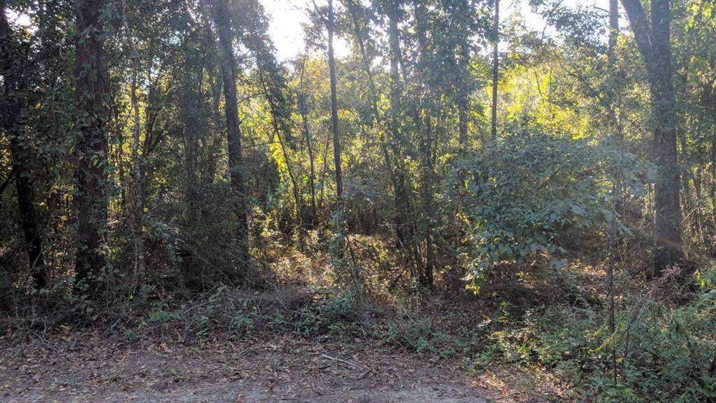 000 Appian Way - Photo 1