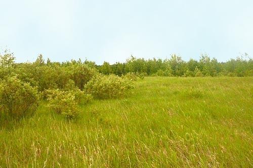 Lot 22 J Bar V Estates, Rural Wetaskiwin County, AB T0C 1Z0 (#E4129034) :: Müve Team | RE/MAX Elite