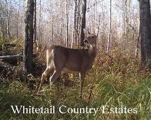 Lot 7 27331 Township Road 481, Rural Leduc County, AB T0C 2C0 (#E4243091) :: Initia Real Estate
