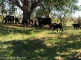 Tampico Ranch - Photo 25