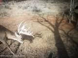 Tampico Ranch - Photo 86