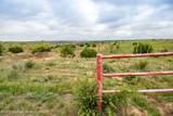 221 Aoudad Ranch - Photo 15