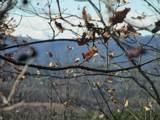 259 Jocassee Ridge Way - Photo 1