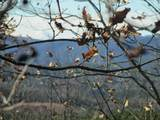261 Jocassee Ridge Way - Photo 3