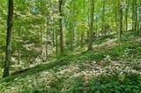 000 Luther Land Rd/ Lot 5 Petty Cove - Photo 12