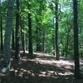 711 Top Ridge Drive - Photo 16