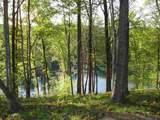 557 Shooting Tree Way - Photo 6