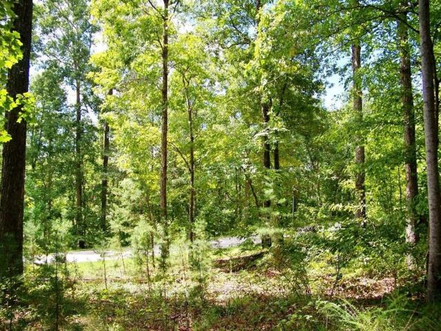 513 Scharlin Drive, Pickens, SC 29671 (MLS #20205999) :: The Powell Group