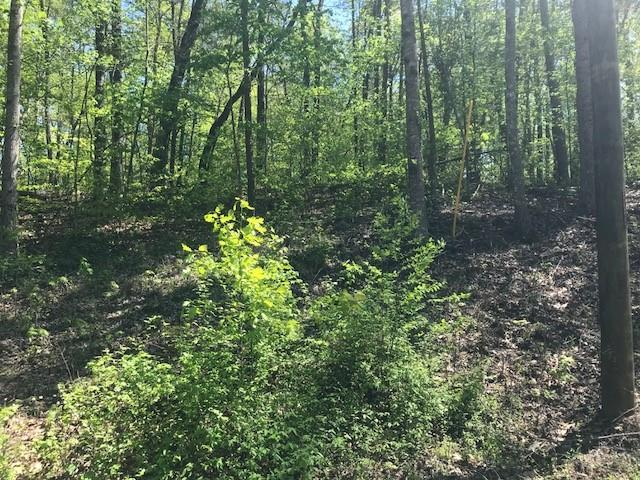Lot 1648,49 Point Road, Westminster, SC 29693 (MLS #20201996) :: Tri-County Properties