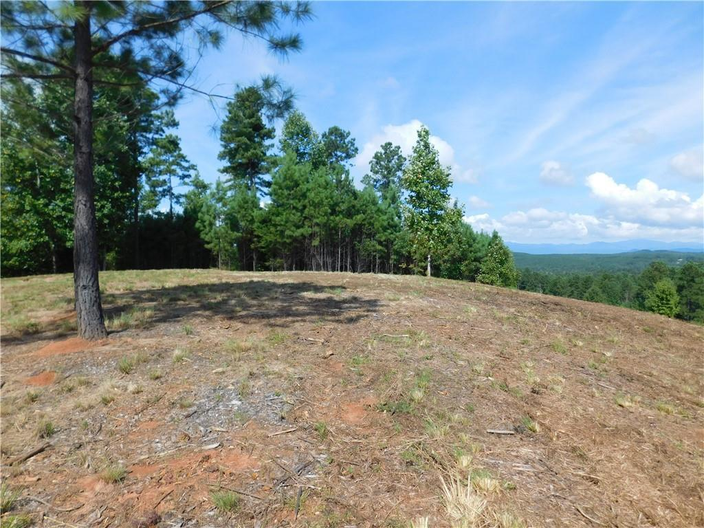 151 Piney Woods Trail - Photo 1