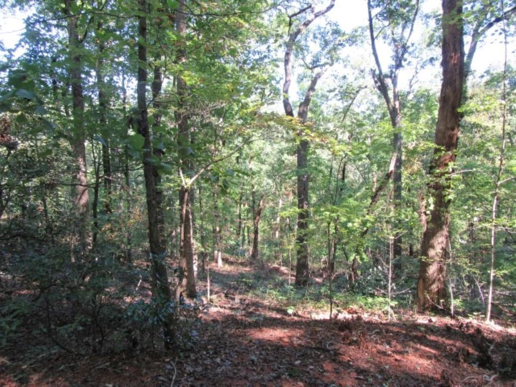 Tract 23 Old Chapman Trail - Photo 1