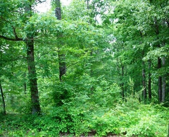 Lot 34 Overlook Drive, Fair Play, SC 29643 (MLS #20213086) :: The Powell Group