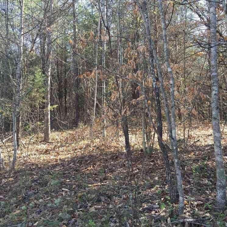 710 Saddle Creek Lane - Photo 1
