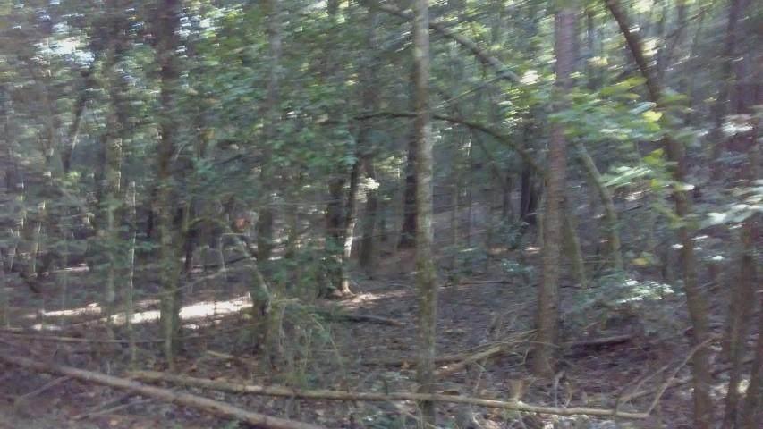 000 Lots 10 & 11 Lake Becky Interior No Lake Access Ro - Photo 1
