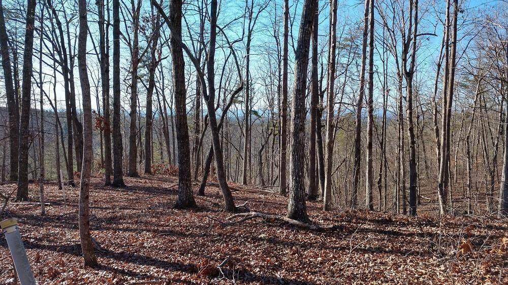 Lot 81 Sawyer Way - Photo 1