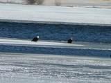 1640 W Lake Dr - Photo 49