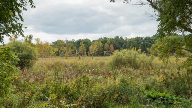 7261 Park Lake Drive, Dexter, MI 48130 (MLS #3260664) :: Keller Williams Ann Arbor