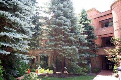 3000 Glazier Way #110, Ann Arbor, MI 48105 (MLS #3254530) :: The Toth Team