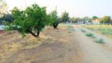 Avenue M10 - Photo 11