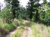 79 acres Fox Hollow & Ventris Road - Photo 12