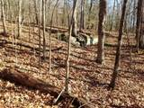 27 acres Mitchells Mile Road - Photo 15