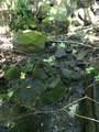 Winn Creek - Photo 17