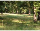 8.5 Acres Dutchmans Drive - Photo 3