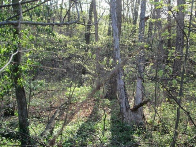 Lot 7 Constance  Cir, Bella Vista, AR 72714 (MLS #1072952) :: McNaughton Real Estate