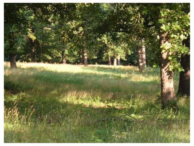 Lot 7 Ironwood Court, Rogers, AR 72756 (MLS #611587) :: McNaughton Real Estate