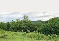 Off Spider Creek Road, Garfield, AR 72732 (MLS #1155257) :: Jessica Yankey | RE/MAX Real Estate Results