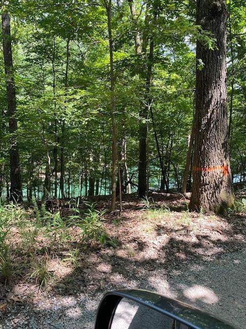 Cr 1521, Eureka Springs, AR 72632 (MLS #1192254) :: McNaughton Real Estate