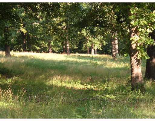 8.5 Acres Dutchmans Drive - Photo 1