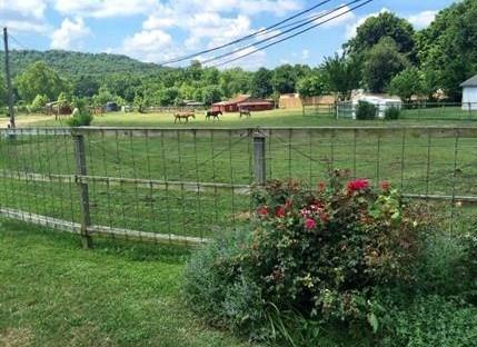 123 E 15Th  St, Fayetteville, AR 72701 (MLS #1105123) :: McNaughton Real Estate