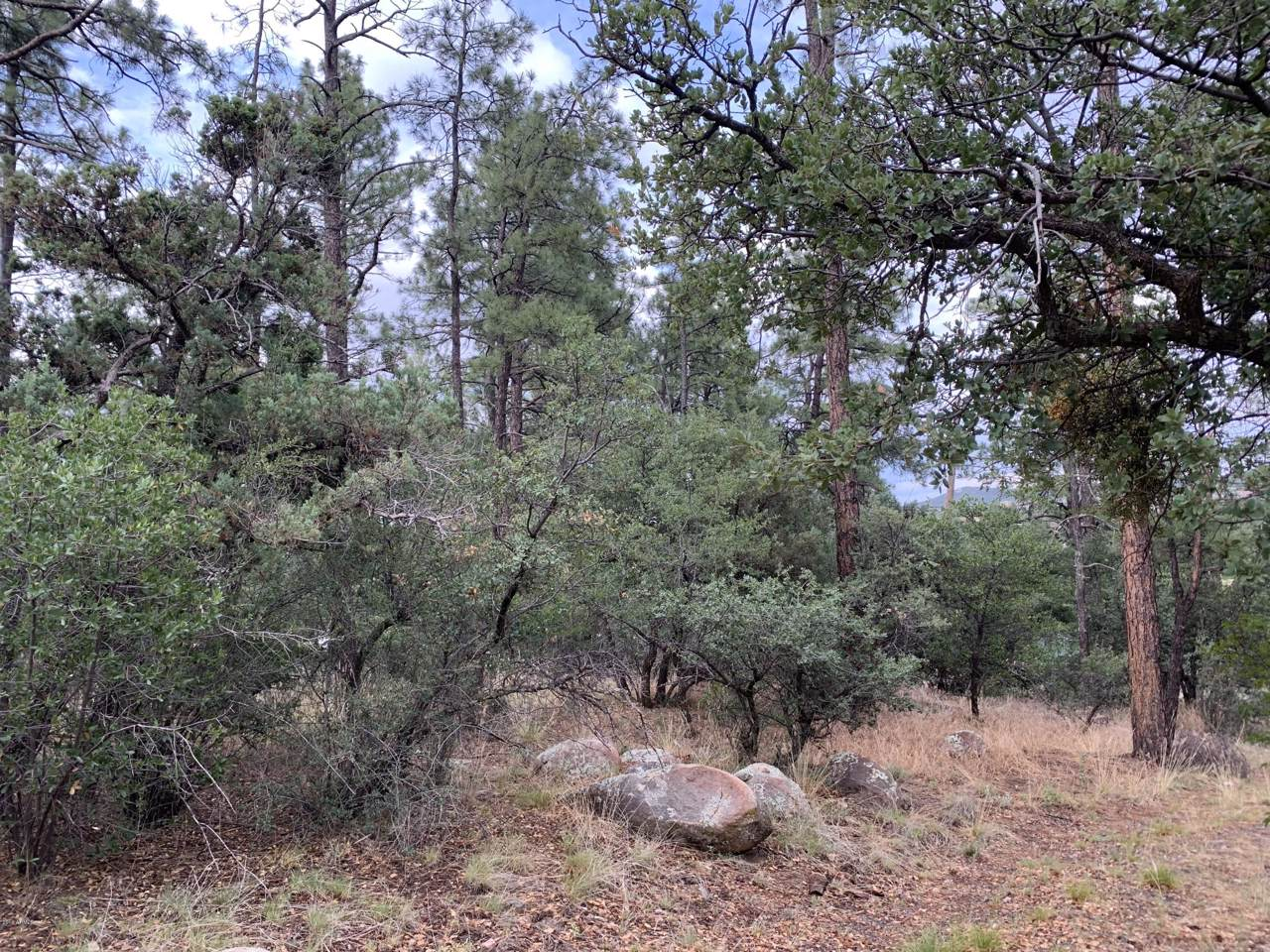 811 Pine Knoll Drive - Photo 1