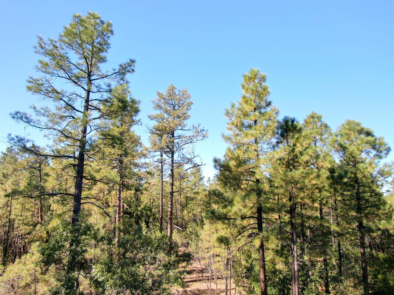 TBD 5 Acres Rim Spur - Photo 1