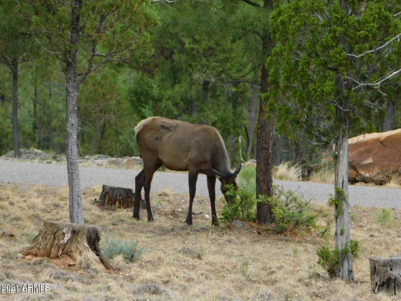 3822 Durango Drive - Photo 1