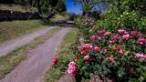7718 Golden Reef Road - Photo 16