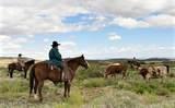 8960 Cutting Edge Ranch Trail - Photo 13