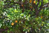 2061 Orchard - Photo 7