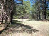 Pcl3T Coconino Forest Rd 867 - Photo 2