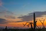 10355 Desert Vista Drive - Photo 13
