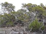 Lot 236 Show Low Pines Unit 3 - Photo 8