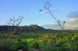 10495 Scopa Trail - Photo 30