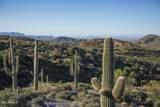 10495 Scopa Trail - Photo 33