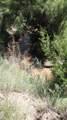 109 River Springs Ranch Unit 3 - Photo 4