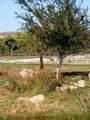 435 Bonito Ranch Loop - Photo 18