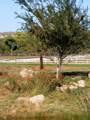 11004 Majestic Vista Lane - Photo 9